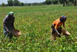 IITA Gets US7m Approval For Commercial Products COMPRO